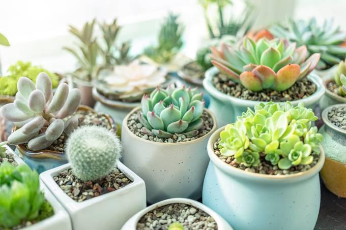 plantas-vasos-ar-puro