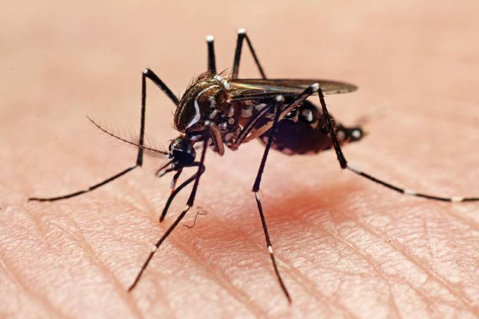 SI_dengue_vacina