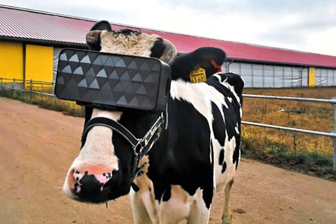 vacas-vr-1