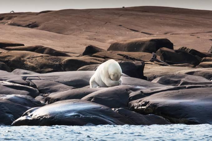 urso-polar-mudanca-climatica