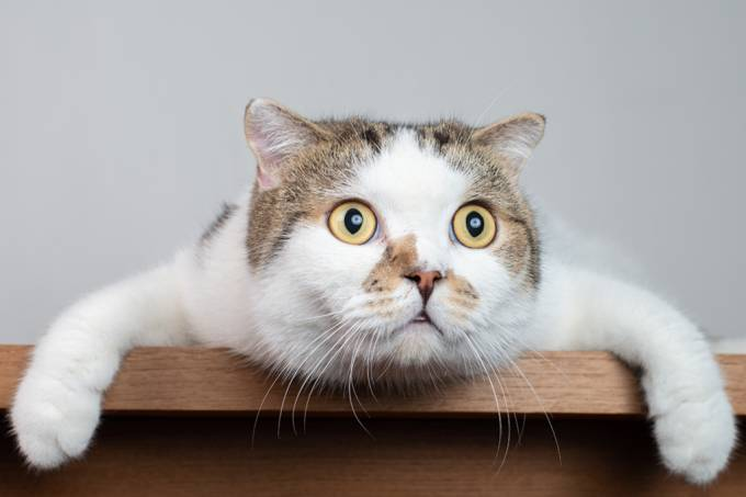 gatos-expressoes-faciais