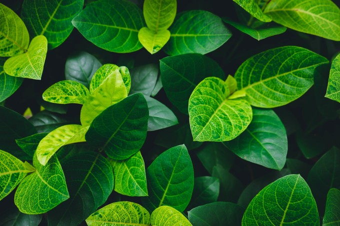 Supawat Kampanna_EyeEm_gettyimages_plantas-sons-estressadas