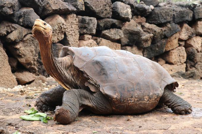 EPA_Galapagos National Park-reproducao_tartaruga_transante_FB