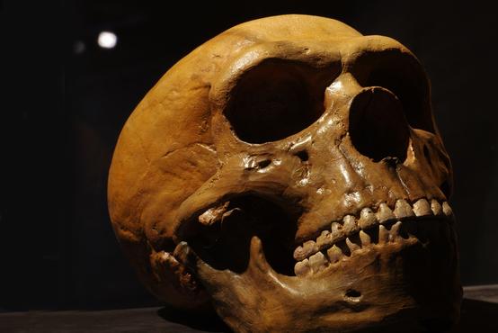 halamka_gettyimages_dna_-neandertal_africa