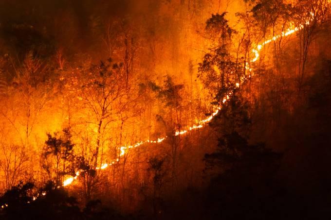 incendio-controlado-floresta