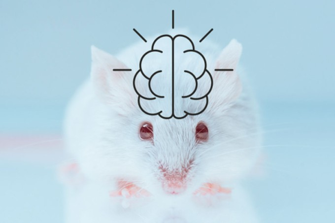 SI_412_Novas_ratos