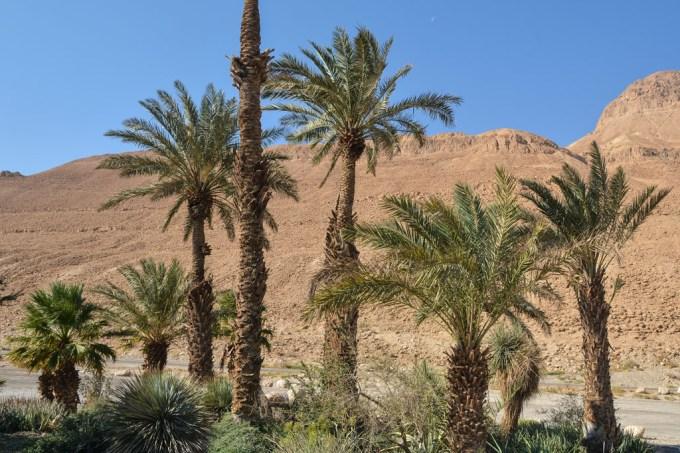 SI_Deserto_Israel