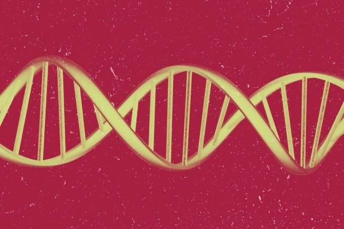 SI_Reino_do_DNA