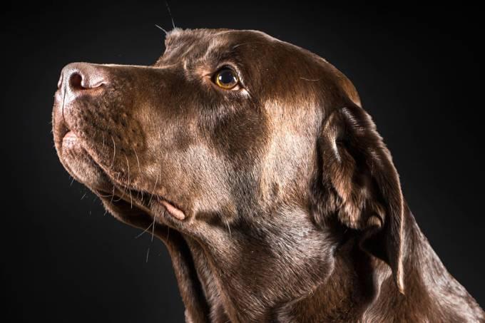 SI_414_Novas_cachorro