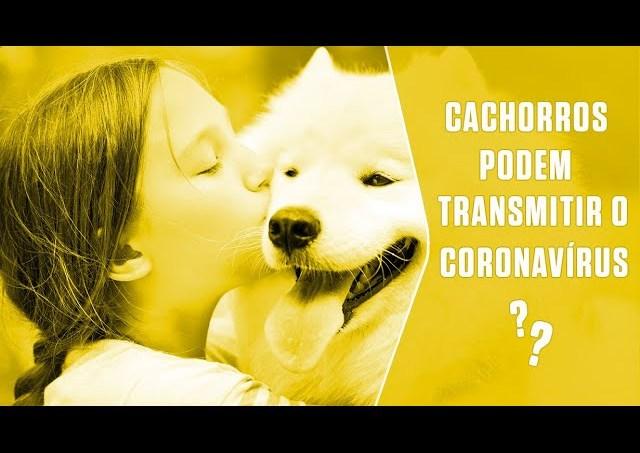 Cachorros podem transmitir o coronavírus? | SUPER Responde