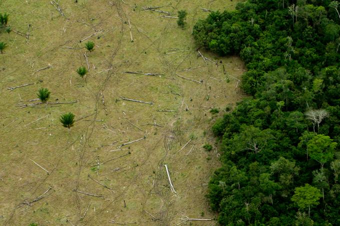 floresta-doencas-site
