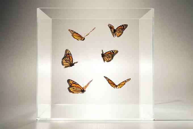 SI_415_borboletas
