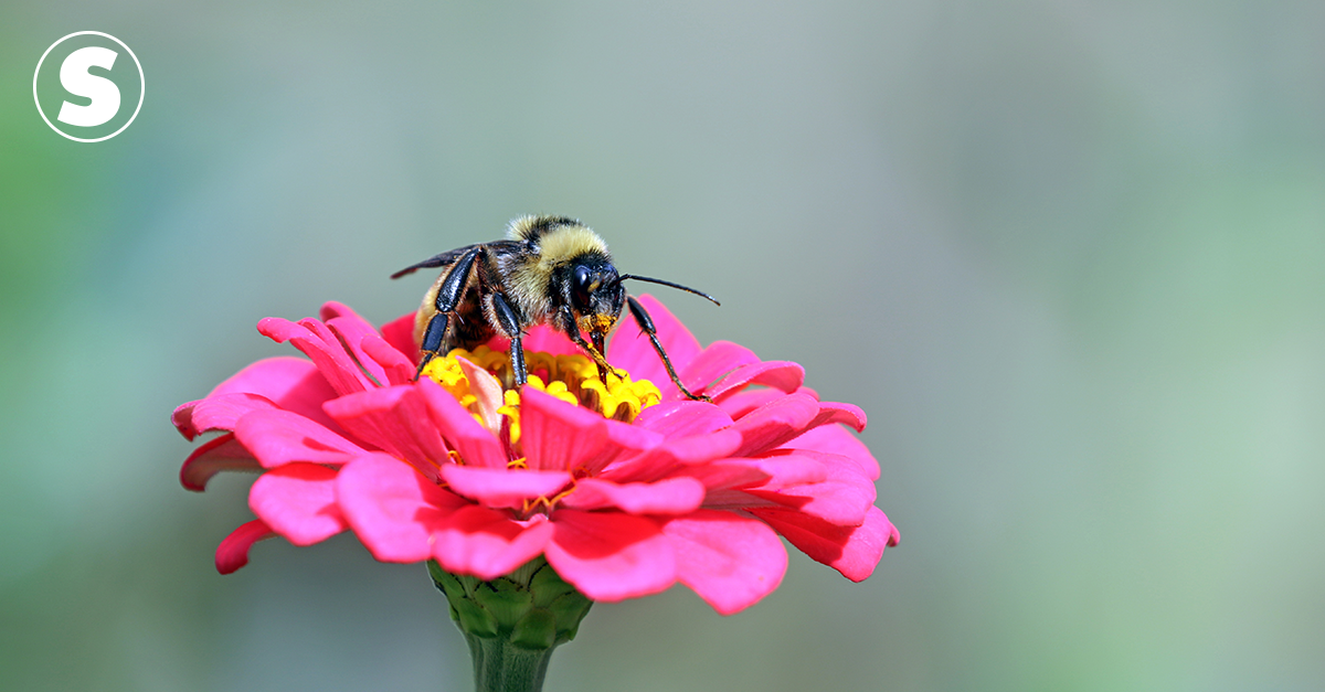 """Bees """"bite"""" plants to stimulate flowering"""