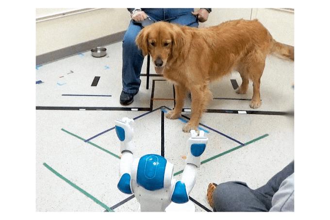 cachorros-robos-comando-site