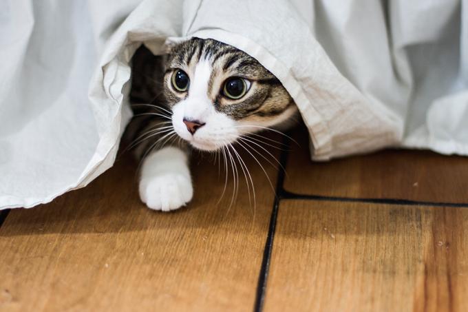 Festival de filmes estrelados por gatos arrecadará fundos para cinemas independentes-site