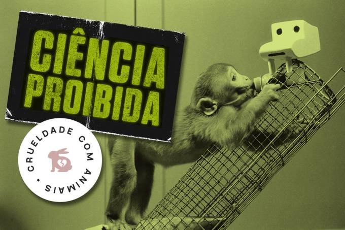 SI_Ciencia_Proibida_macacos