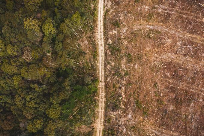 ONU e OMS alegam que pandemias são resultados da destruição da natureza