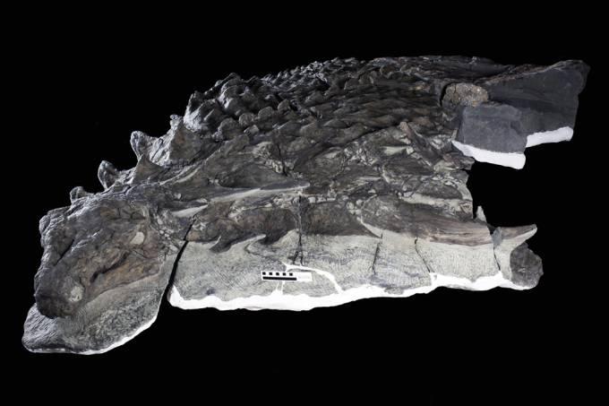 A última refeição desse dinossauro ficou preservada 110 milhões de anos depois