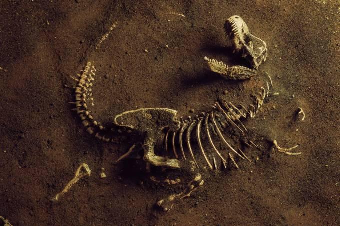 SI_Dinos_Paleontologos