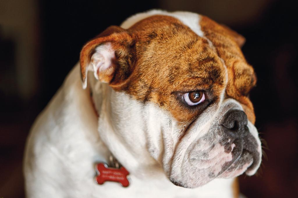 Como suprir as necessidades emocionais dos cães