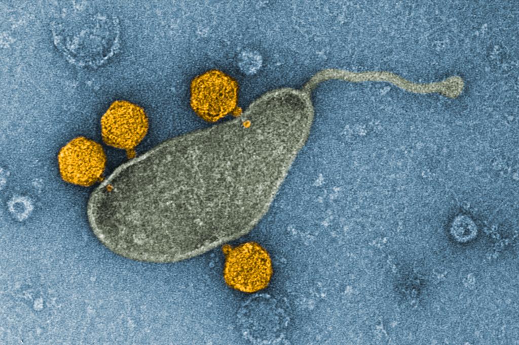 A bactéria mais comum dos oceanos tem seu DNA hackeado por um vírus