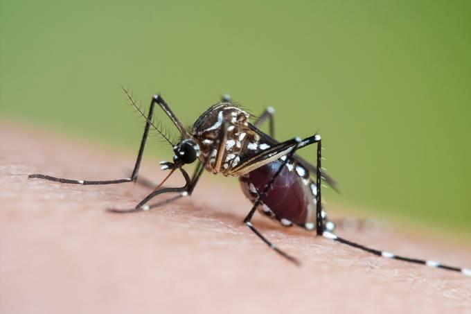 Mudanças climáticas podem levar o zikavírus para a Europa