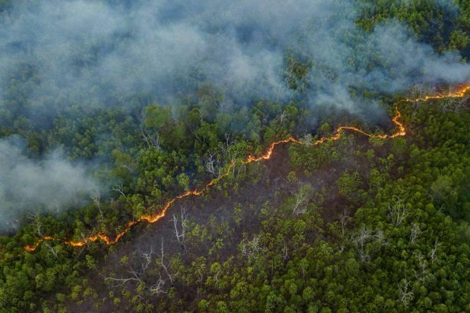 Desmatamento na Amazônia em junho é o maior em 5 anos (SEO)