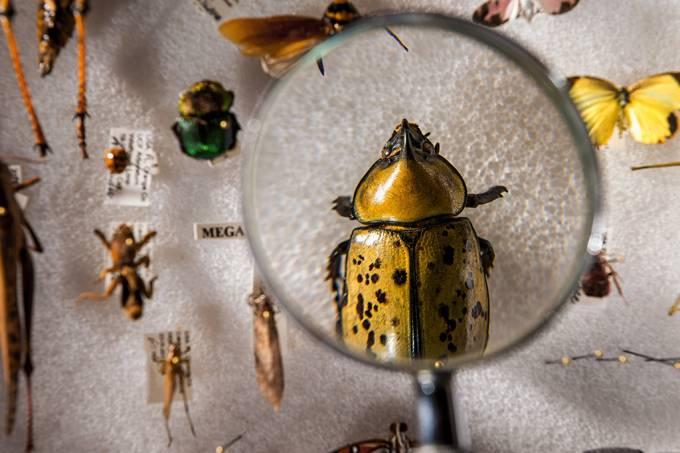 Cientistas propõem plano para criar lista universal de espécies