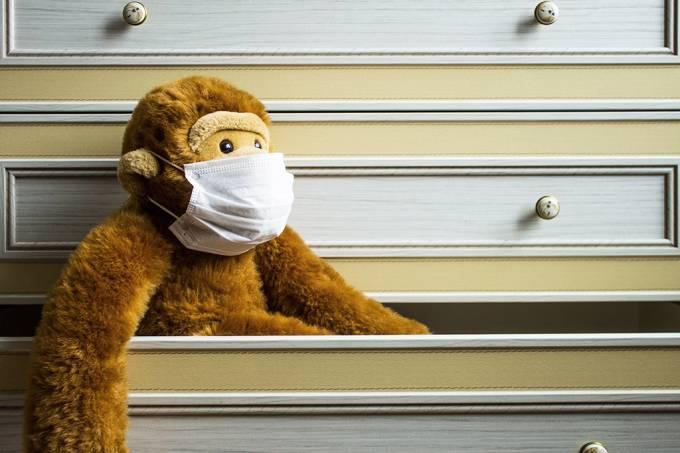 Macacos ficam imunes após se curarem de covid-19, indica estudo