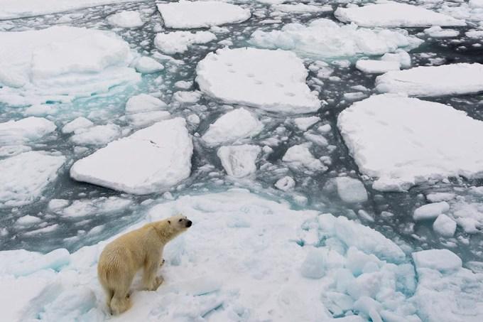 Extinção dos ursos polares