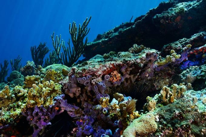 Cientistas encontram bactérias vivas que podem ter 100 milhões de anos