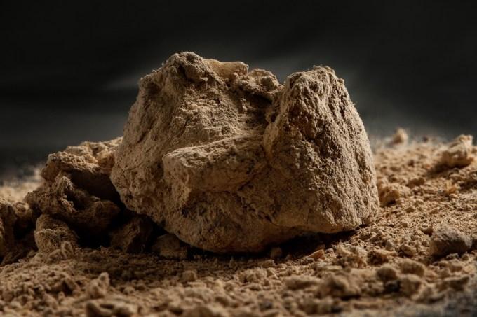 Cocô fossilizado de 14 mil anos entra para os vestígios mais antigos da humanidade na América do Norte