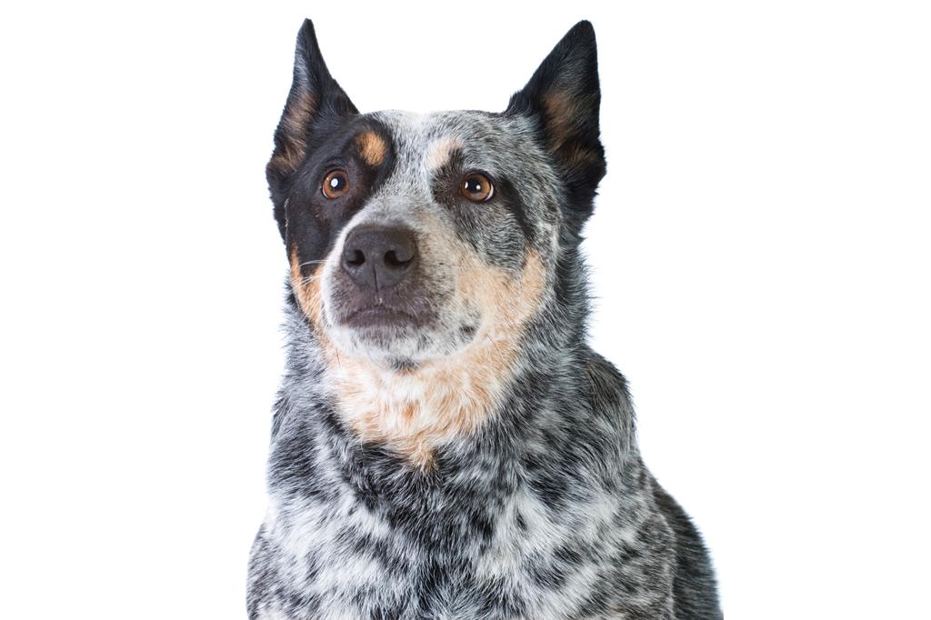 <strong>O Matusalém canino.</strong>