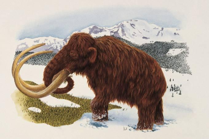 Ossada de mamute com 10 mil anos é encontrada em lago na Sibéria