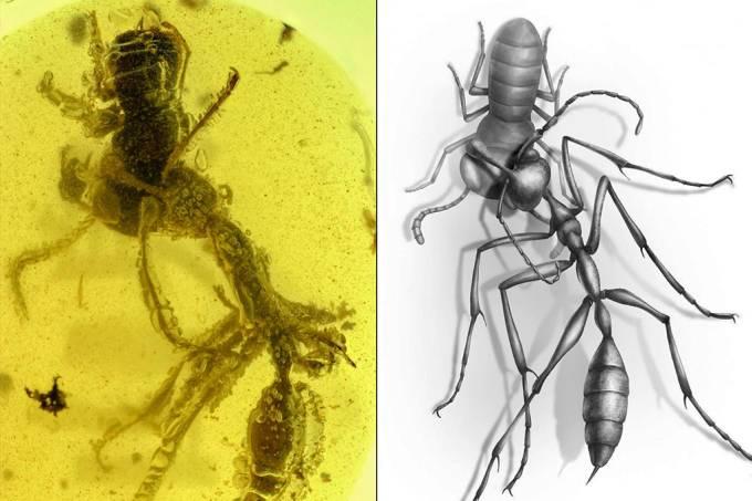 """Pesquisadores encontram """"formiga do inferno"""" preservada em âmbar de 99 mil anos"""
