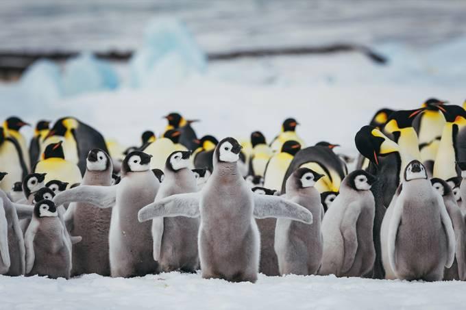 Imagens de satélite revelam colônias de pinguins até então desconhecidas