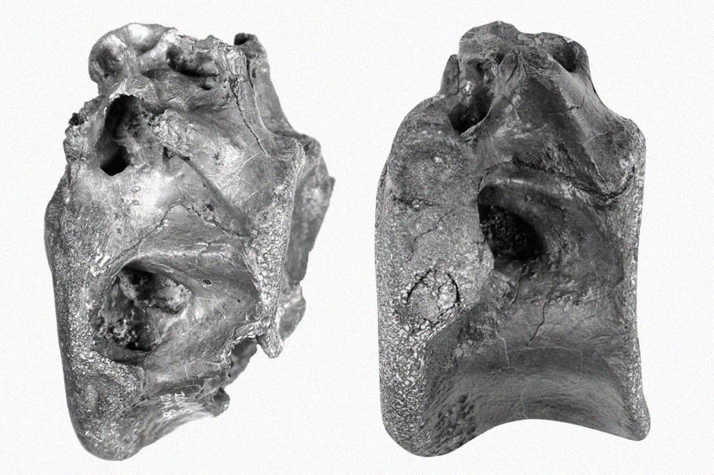 Cientistas descobrem dinossauro parente do T-Rex na Inglaterra