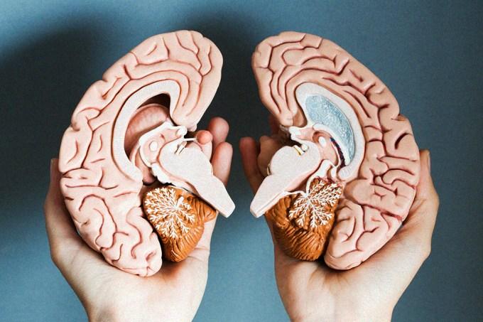 Quando não dormimos o suficiente, nosso cérebro começa a comer a si próprio