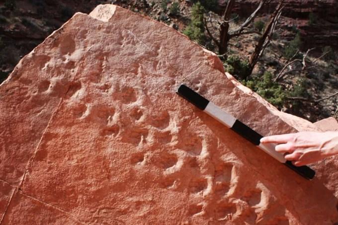 Cientistas encontram pegadas de répteis pré-históricos em pedra no Grand Canyon