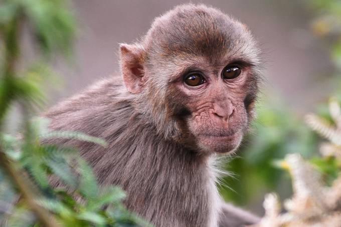 Covid-19: EUA enfrenta escassez de macacos, necessários para testagem de vacinas