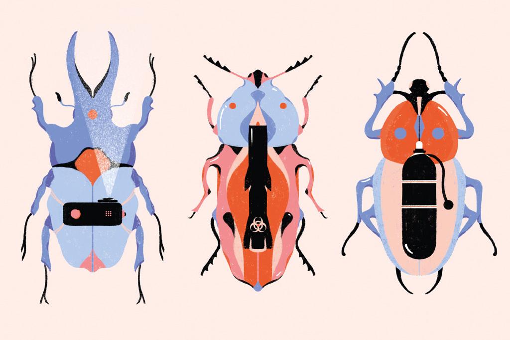 3 notícias sobre… besouros