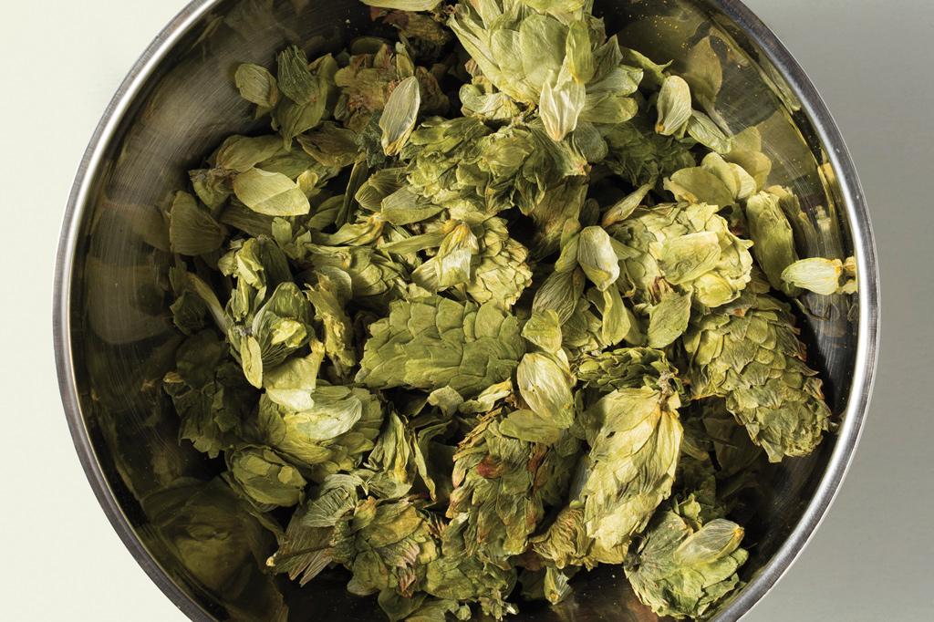 <strong>100 litros de cerveja consomem 40 a 300 gramas de lúpulo.</strong>