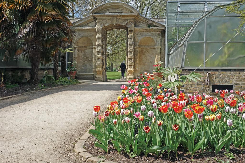 <strong>O primeiro Jardim Botânico da Inglaterra fica na universidade.</strong>
