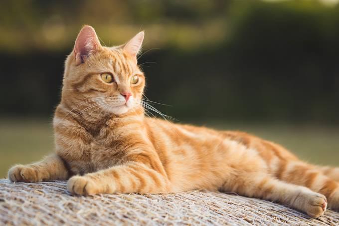 Pesquisadores identificam cinco tipos de dono de gato. Qual é o seu?