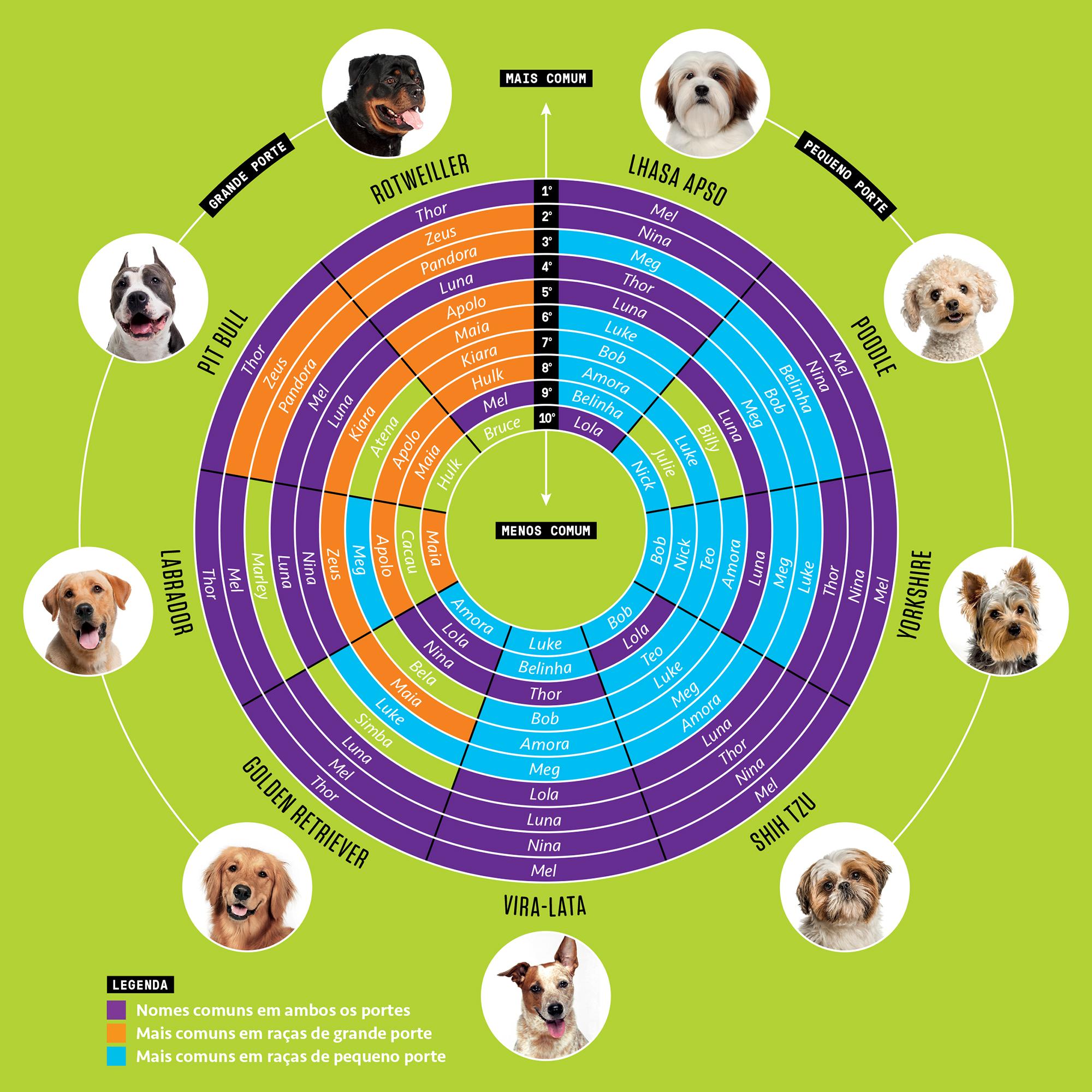 Os nomes de cachorro mais populares do Brasil