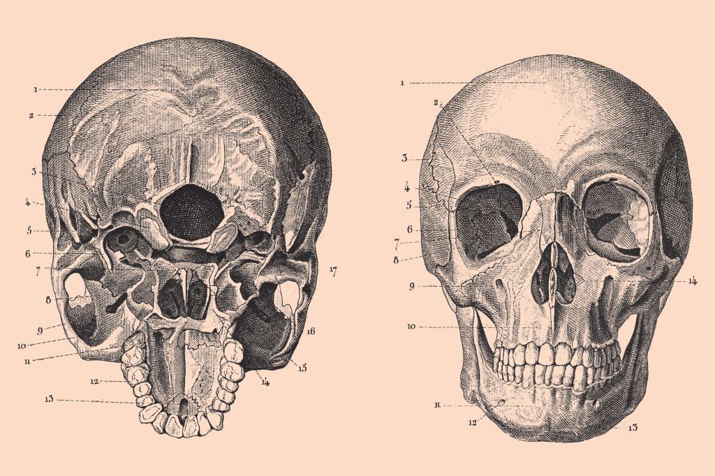 <strong>Em várias espécies, a simetria serve como sinal de saúde. E assim desperta desejo sexual. Pessoas lindas têm traços mais simétricos.</strong>