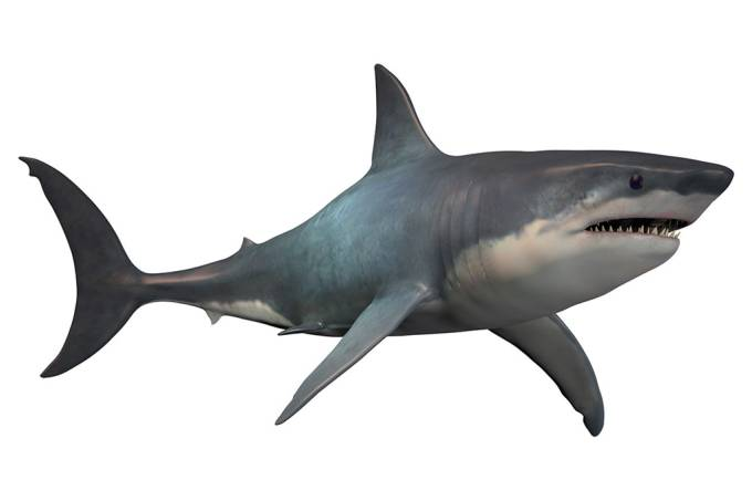 Megalodon era 3x maior que tubarão branco, revela pesquisa