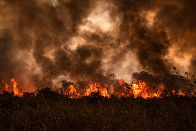 Nenhuma das metas de proteção da natureza foi atingida na última década