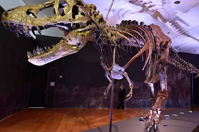Esqueleto de T-rex será leiloado em Nova York