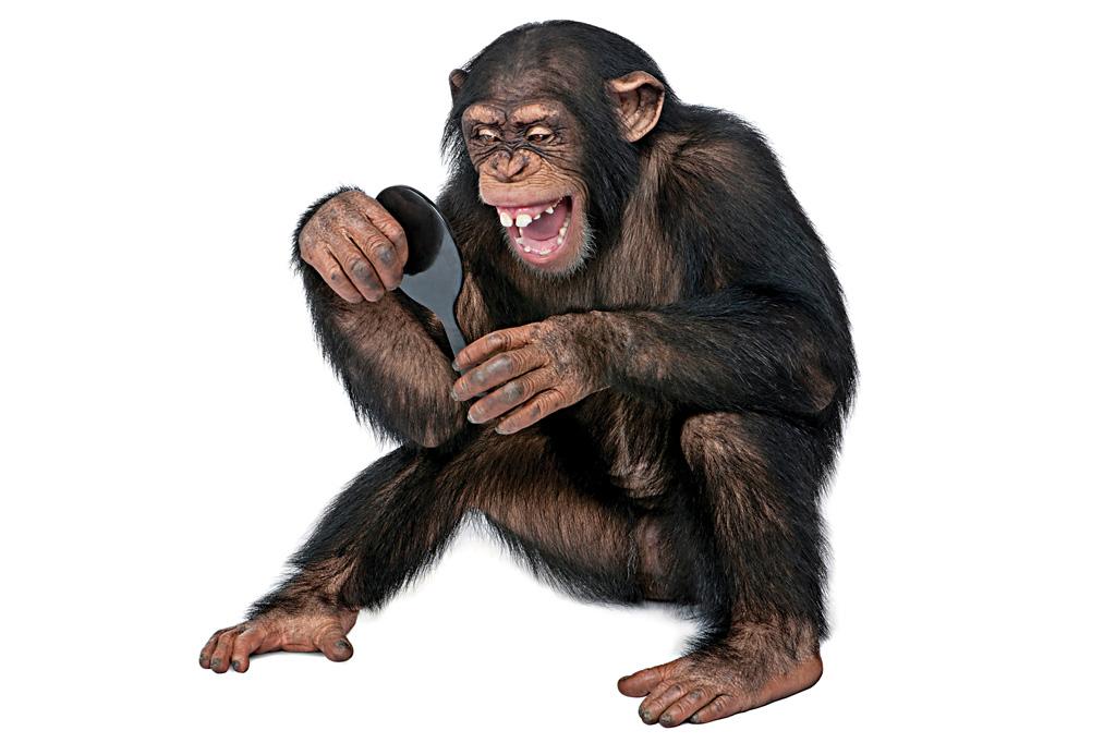 <strong>PRIMATAS TECH – Macacos fabricam as próprias ferramentas e são hábeis negociadores.</strong>